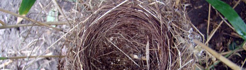 Trachycarpus fortunei - a palm for your birds